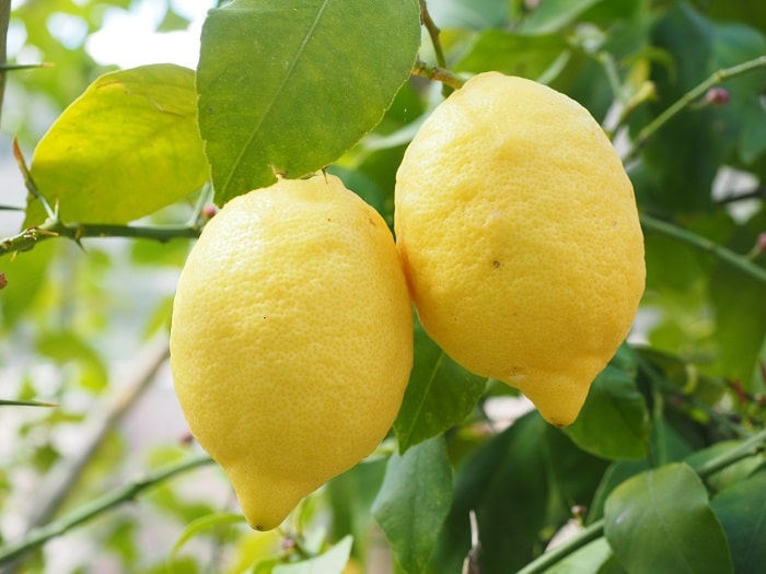 Lemons which make lemon essential oil which a great for cleaning
